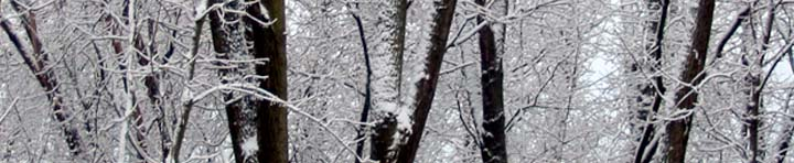 Banner image: Winter trees