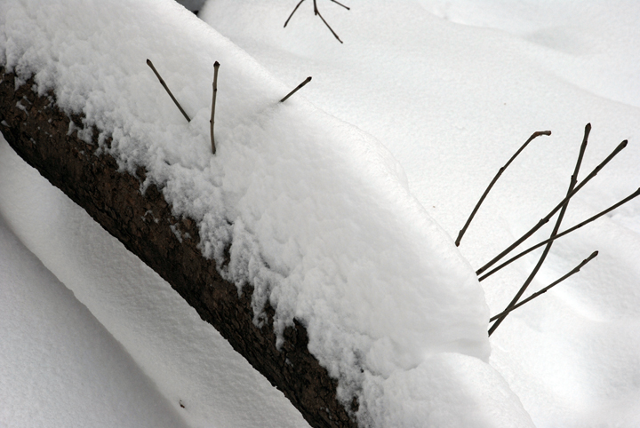 Snow on tree trunk